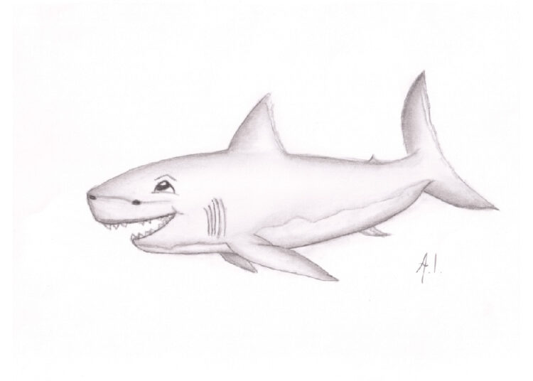 Pencil drawing of smiling great white shark