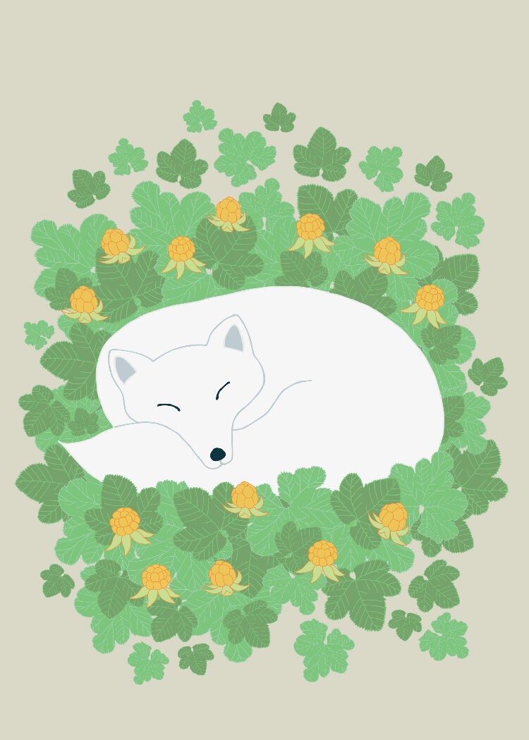 Illustration of arctic fox in white winter coat sleeping among cloudberries
