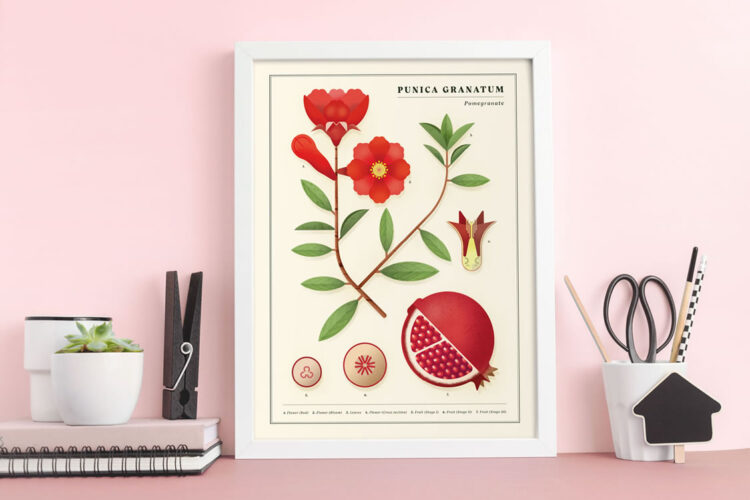 Punica granatum (Pomegranate) poster on pink office table with big clothespin, pens and pads and scissors
